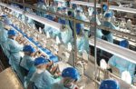 Chicken_Production_Line-ncc