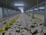 precision-poultry-farm