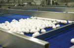 Eggs-on-conveyor-2.jpg