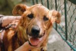 Pet-shelter-HSUS-blog