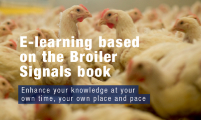 Vetworks-Broiler-Signals-Online-Study-Centre