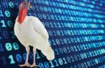 white-turkey-binary-code