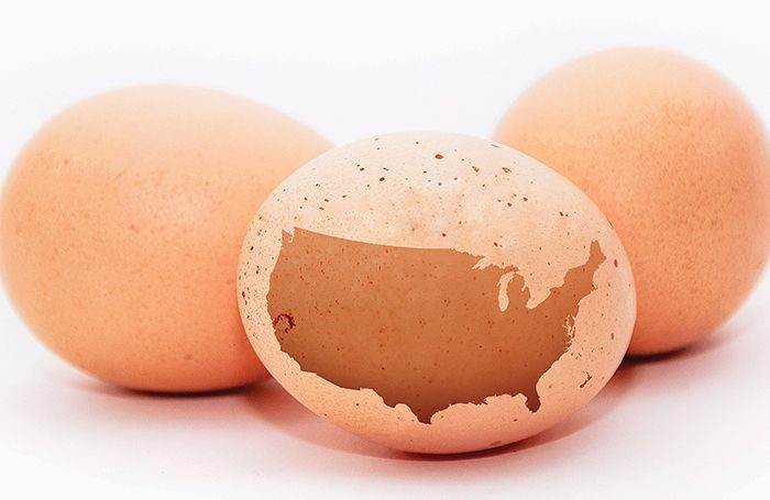 Top 20 Us Egg Producers In 2020 Wattagnet