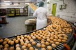 egg-on-production-line.jpg