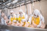 chicken-processing-line