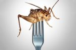 insect-based-protein-consumption