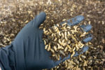 insect-protein-poultry-feed