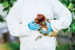 Poultry-veterinarian