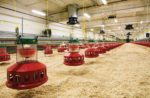 well-prepared-broiler-house