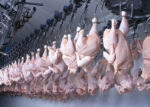 chicken-processing-life-China
