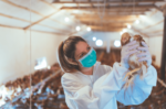 veterinary-woman-examines-a-chicken-in-a-poultry-farm