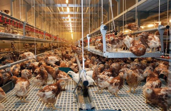 5 Cage Free Aviary Facts Egg Producers Should Know Wattagnet