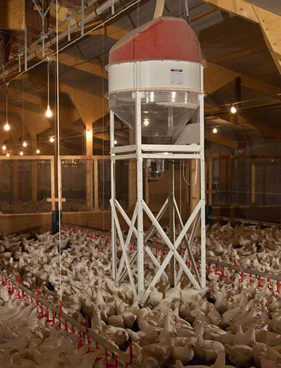 Collinson Spin broiler feeding system