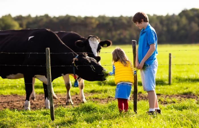 Children-and-cows