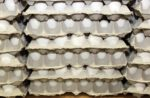 Willamette Egg Farms purchase