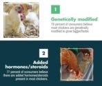 6 most common consumer misconceptions about chickens_MAIN ARTICLE IMAGE