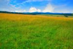 meadow-germany.jpg