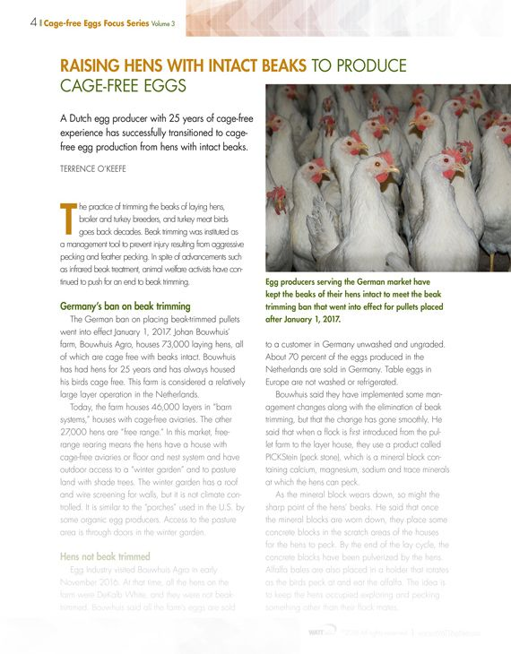 Cage-free eggs: Hen Welfare and Housing Challenges