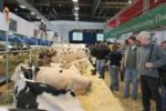 cattle-production-1410FIeurotier1.jpg