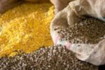 animal-feed-corn-1307FIbrazil1.jpg