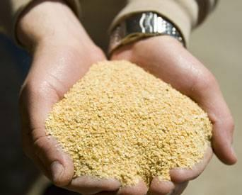 Soybean-meal-in-poulty-diets-1405FMIngredients1.jpg