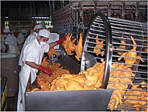 drip-line-1206PIpoultryprocessing1.jpg