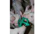pig-playing-toy-1411PIGtoys