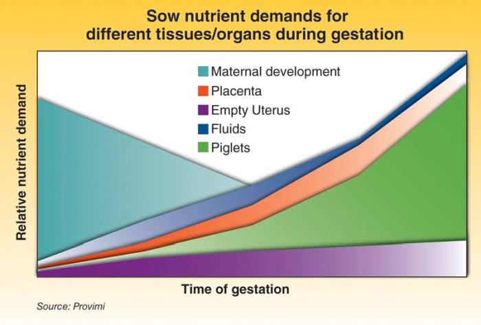 Sow-nutrient-demands-1301PIGsownutrition1