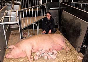 Farrowing Crate Alternatives