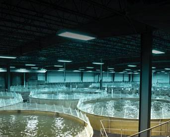 Bell Aquaculture promotes sustainability in production, feed