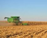 gm-crop-harvest-1411FMGrain1