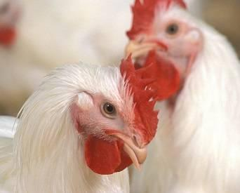 Analysis: Avian flu, is your biosecurity plan ready?
